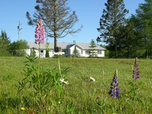 house_and_lupins